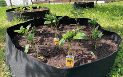 Garten-Aktivitäten im Saatkorn Projekt